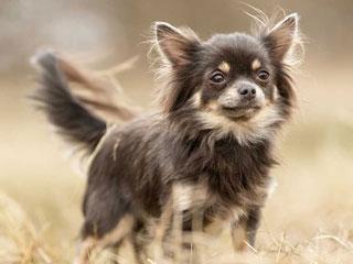 Зуд может стать причиной смерти собаки