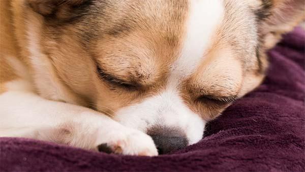 У собаки должно быть собственное спальное место